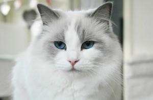 DK*Kittyrags Melina